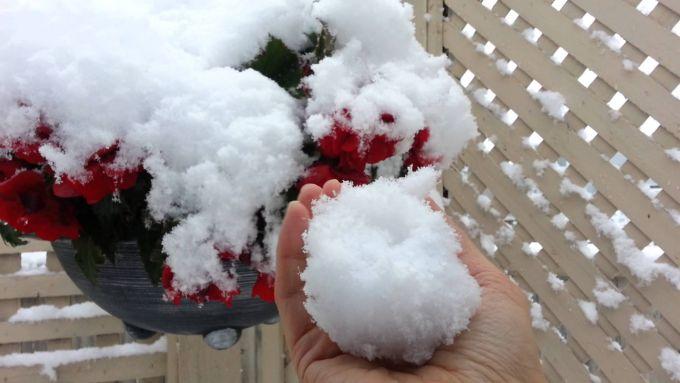 Снігопади в Тунісі і Алжирі (ВІДЕО)