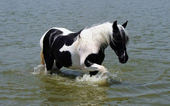 Блискавка вбила 23 коней в Кентуккі