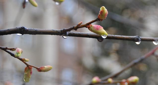 12 березня в Україну прийдуть похолодання і дощі