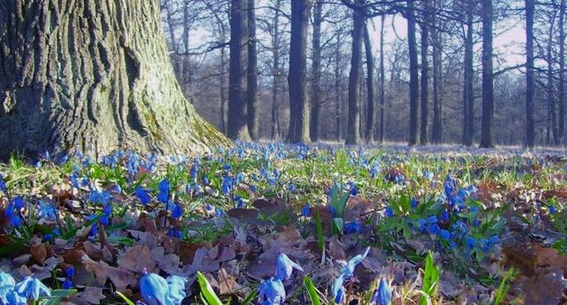 25 березня тепла погода охопить всю Україну