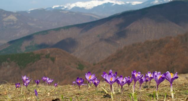 26 березня в Україні очікується до 22 градусів тепла