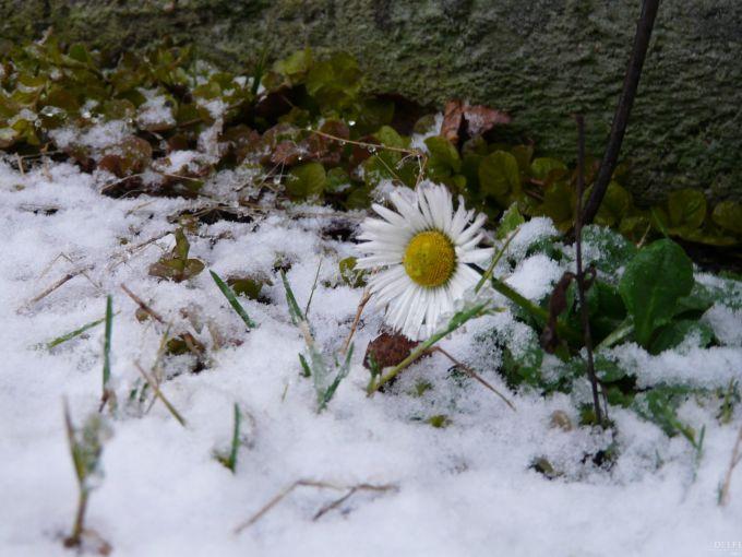 Снігопади обрушились на Естонію і Латвію