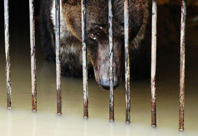 200 тварин загинули від повеней в Іспанії