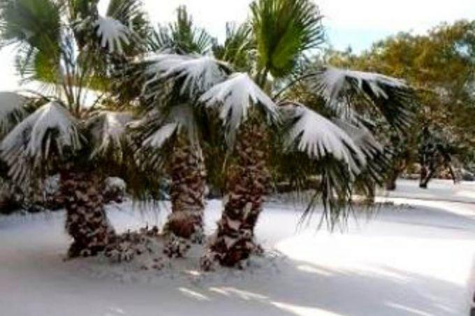 У Тунісі тисячі автомобілів потрапили в снігову пастку