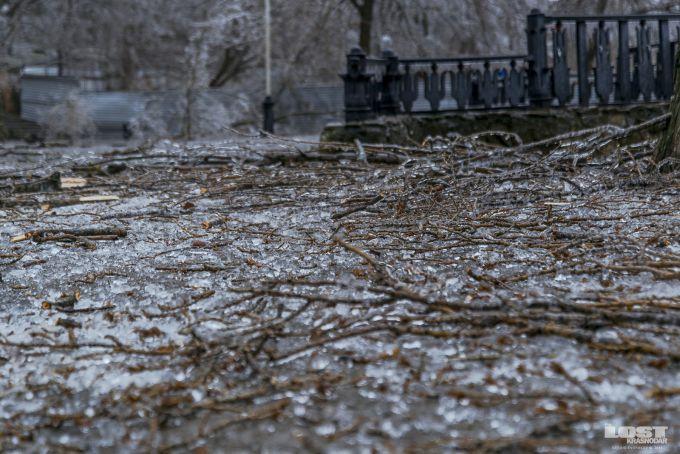 В Угорщині ураганний вітер повалив дерева