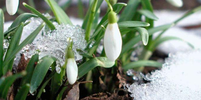 10 березня в Україні буде сонячно та без опадів