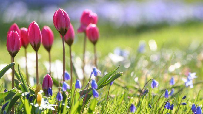 Погода цього тижня принесе в Україну справжню весну