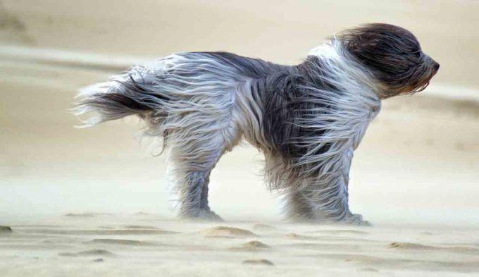 У Карпатах і на сході України посилиться вітер